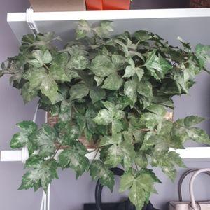 Other - Plant Decor